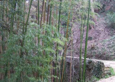 BambousParadou
